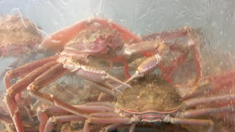 Crabs in an aquarium Stock Video Footage