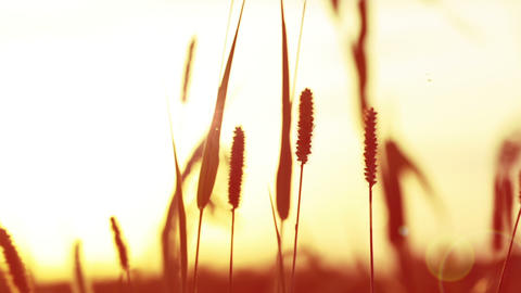 Sunset And Grass stock footage