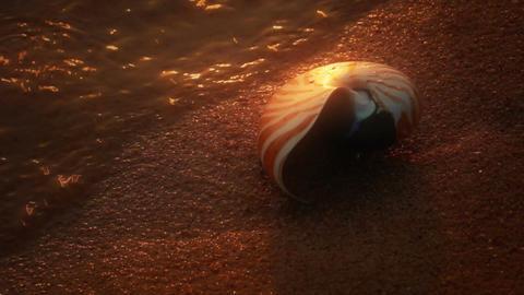 Nautilus on Beach Stock Video Footage