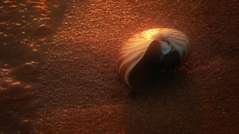 Nautilus On Beach stock footage