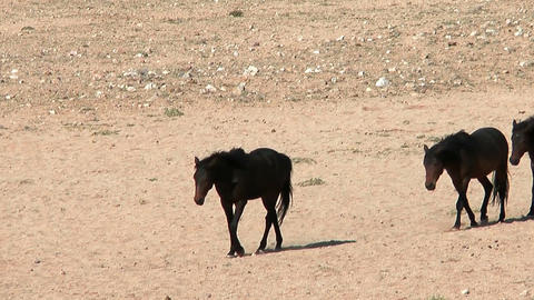 wild horses in namib desert Stock Video Footage