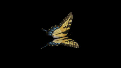 Swallowtail Butterfly I - Side Close-Up Loop + Alpha Animation