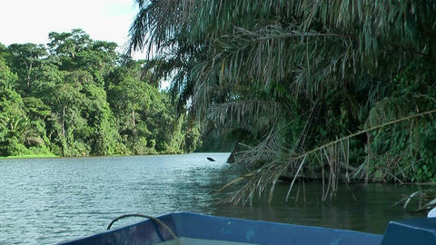 Gliding with a boat through tortuguero national park Footage