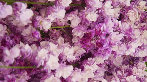 藤の花 ビデオ