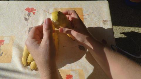 Peeling a Banana Up Close Live Action