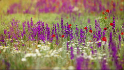 Landscape from meadow flowers Live Action