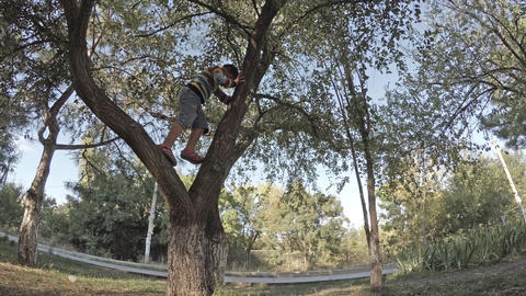 A boy climbs on branches of a tree Footage