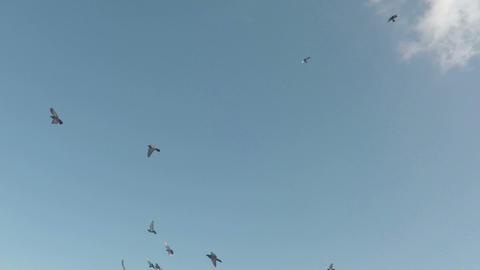 Doves flock in sky Footage