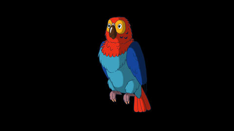 Colorful parrot wakes up HD alpha channel Animation
