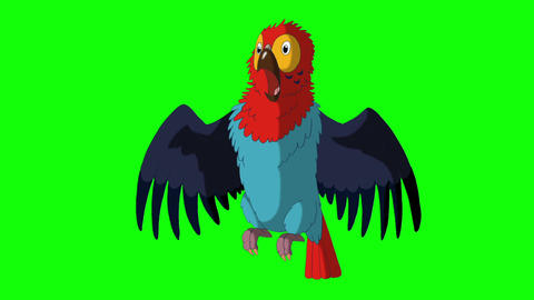 Colorful parrot gets angry HD green screen Animación