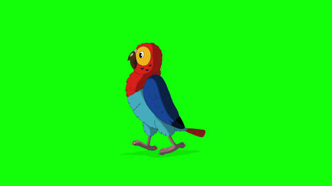 Colorful parrot walks and stops HD green screen Animation