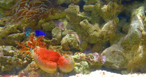Small Colorful Deep Sea Coral Fish In Aquarium Footage