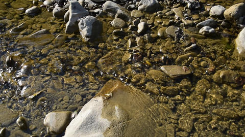 Creek with clear running water. The flow of water, twice delayed shooting Archivo