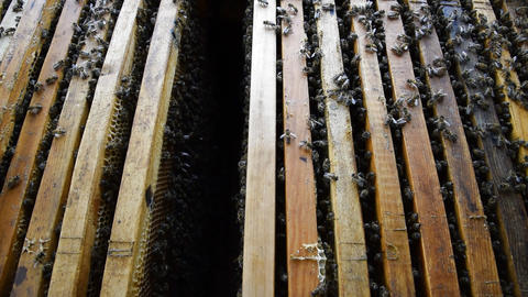Honey bees on the home apiary Footage