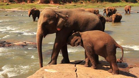 Elephants Footage