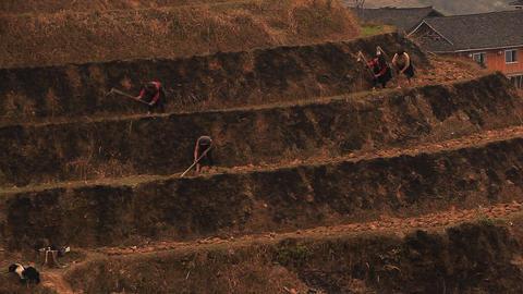 Peasants grow up rice Longsheng Footage
