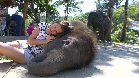 The joy of companionship with a baby elephant. Thailand. Phuket Footage