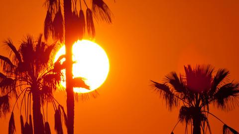 2016-08-07 Sunset Palms V02 HD Footage