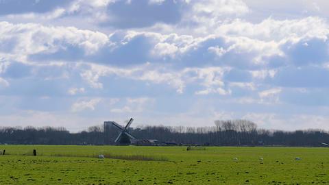Historic windmill pasture Netherlands Footage
