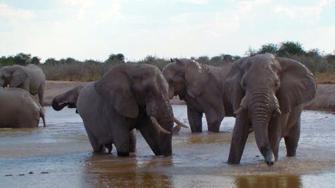 Elephant family bathing action in a waterhole Africa Footage