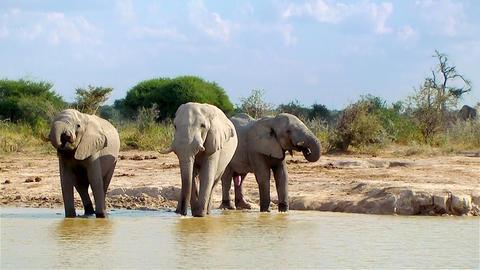 Elephant entering waterhole on a sunny day Botswana Footage