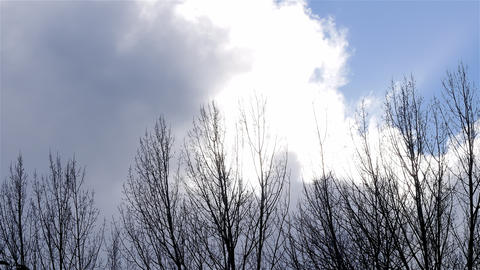 Timelapse big clouds drifting behind trees Footage