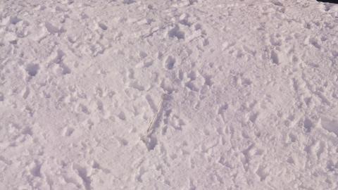 雪 Footage