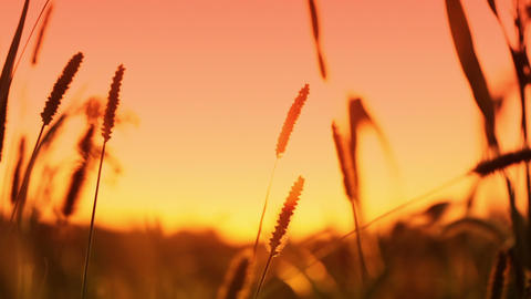 Sunset in the grass Stock Video Footage