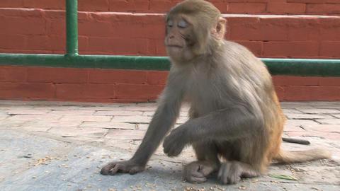 Nepal 191 Stock Video Footage