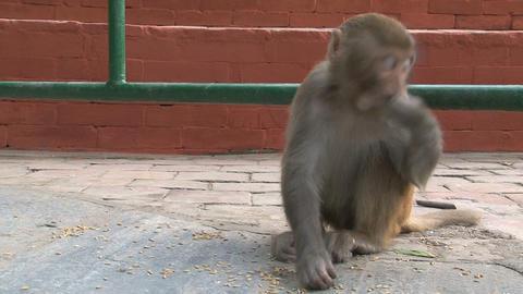 Nepal 191 Footage