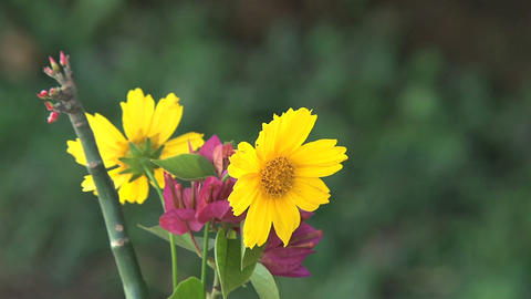 Yellow and purple flowers Stock Video Footage