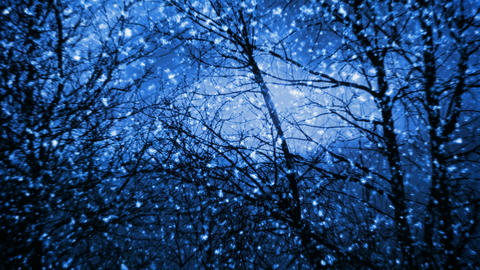 Night snowfall Stock Video Footage