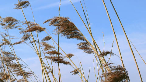 blades of grass waving in wind close up Stock Video Footage