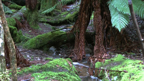 scenic water stream in tasmania rain forest Stock Video Footage