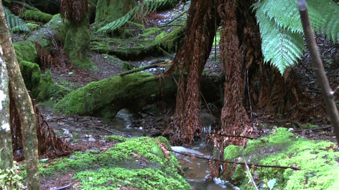 scenic water stream in tasmania rain forest Footage