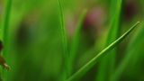 Walking Through Grass Macro stock footage