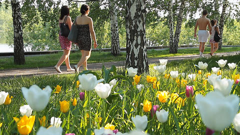 City flowers Footage
