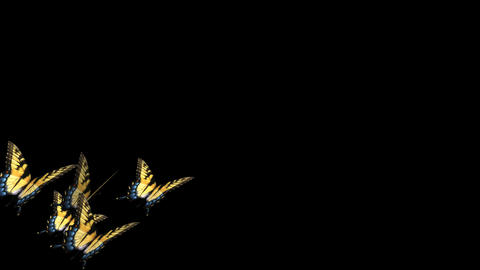 Swallowtail Butterfly Transition - 11 Stock Video Footage