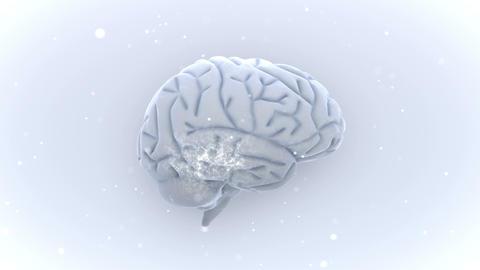 Brain 2 A 1 W HD Stock Video Footage