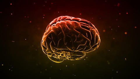 Brain 2 B 1 D HD Stock Video Footage