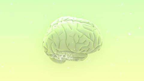 Brain 2 B 1 W HD Stock Video Footage