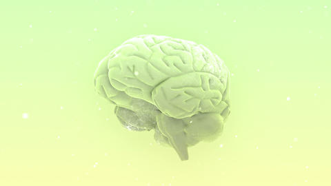 Brain 2 B 1 W HD Animation