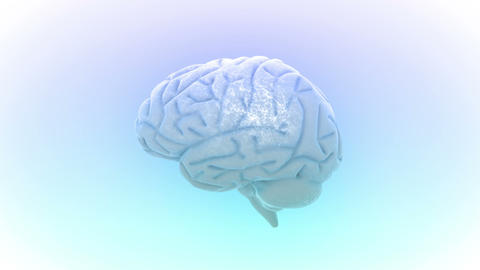 Brain 2 C 1 W HD Animation