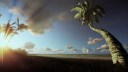 Tropical landscape, palm trees blowing in the wind, morning mist Animation