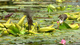 Swamp Birds Footage