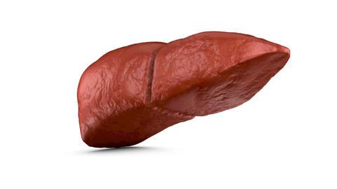 The human liver Animation
