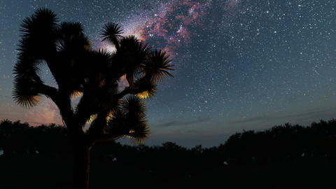 trees and Milky Way stars at night. Elements of this image furnished by NASA Footage