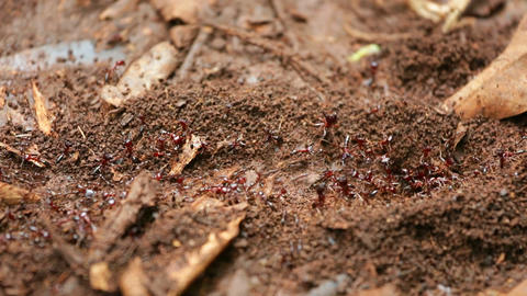 Ant Trail in Karura Forest, Kenya Footage