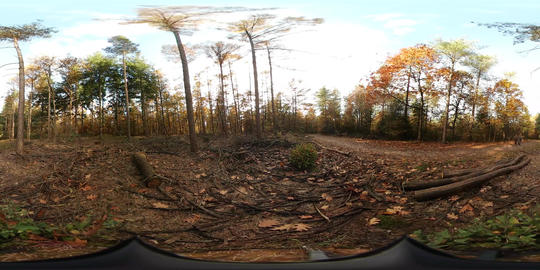360VR video of Walking people at Forest at the National Park in Nijverdal Footage