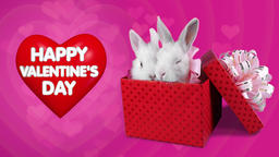 A funny romantic couple of rabbits in present box, Happy Valentines Day concept Footage